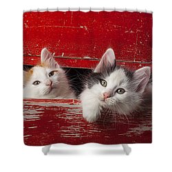 Two Kittens In Red Drawer Shower Curtain by Garry Gay