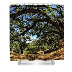 Under The Oak Canopy Shower Curtain by Donna Blackhall