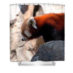 Valley Of The Red Panda Shower Curtain by LeeAnn McLaneGoetz McLaneGoetzStudioLLCcom