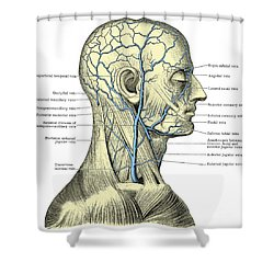 Veins Of The Head And Neck Shower Curtain by Science Source
