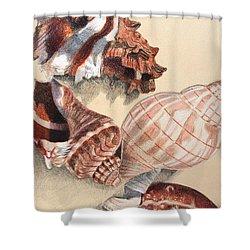 Vertical Conch Shells Shower Curtain by Glenda Zuckerman