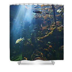 View Of Fish In An Aquarium In The San Shower Curtain by Laura Ciapponi