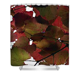 Vine Leaves Shower Curtain by Douglas Barnard