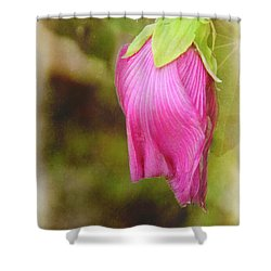 Vintage Pendant Shower Curtain by Judi Bagwell