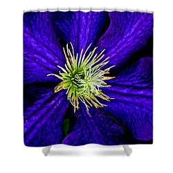 Wall Flower Shower Curtain by Frozen in Time Fine Art Photography