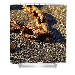 Washed Ashore Shower Curtain by Cheryl Young