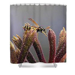 Waspage In The Kangaroo Paw Shower Curtain by Joe Schofield
