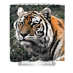 Watchful Bengal Tiger - Brush Stroke Shower Curtain by Darcy Michaelchuk