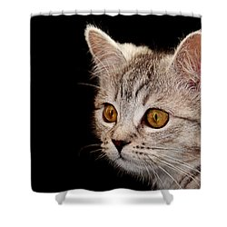 Watching You Shower Curtain by Claudia Moeckel