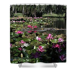 Water Lilies In The St. Lucie River Shower Curtain by Sabrina L Ryan