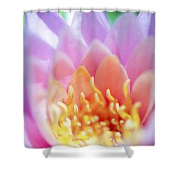 Water Lily Center Shower Curtain by Kicka Witte