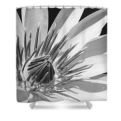 Water Lily Macro In Black And White Shower Curtain by Sabrina L Ryan