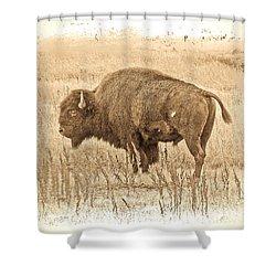 Western Buffalo Shower Curtain by Steve McKinzie