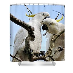White Cockatoos Shower Curtain by Kaye Menner