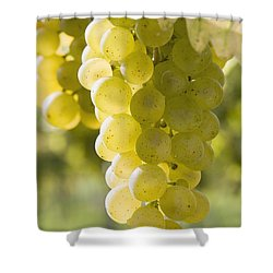 White Grapes Shower Curtain by Michael Interisano