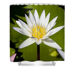 White Lotus Shower Curtain by Kelley King