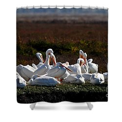 White Pelicans Shower Curtain by Wingsdomain Art and Photography