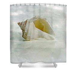White Seashell Shower Curtain by Cindi Ressler