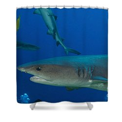 Whitetip Reef Shark, Papua New Guinea Shower Curtain by Steve Jones