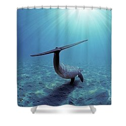 Wild Bottlenose Dolphin Shower Curtain by Jeff Rotman and Photo Researchers