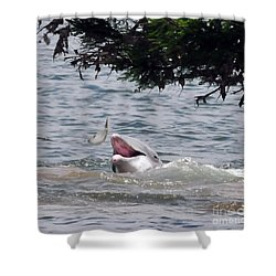 Wild Dolphin Feeding Shower Curtain by Paul Ward