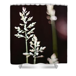 Wild Grass Shower Curtain by Andy Prendy
