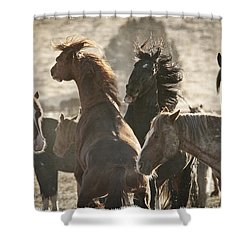 Wild Horse Battle D1713 Shower Curtain by Wes and Dotty Weber