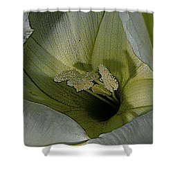 Wildflower Window Shower Curtain by Chris Berry