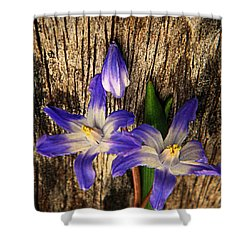 Wildflowers On Wood Shower Curtain by Chris Berry