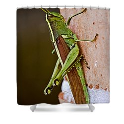 Wings In Brown Shower Curtain by DigiArt Diaries by Vicky B Fuller