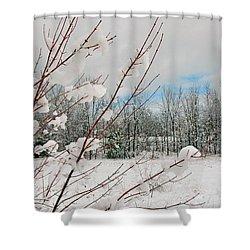 Winter Woods Shower Curtain by Joann Vitali