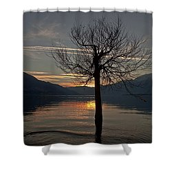 Wintertree In The Evening Shower Curtain by Joana Kruse