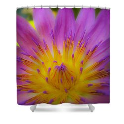 Wishing On A Star 3 Shower Curtain by Rachel Cohen
