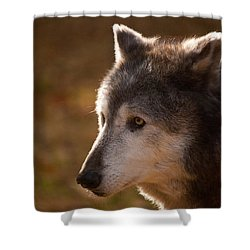 Wolf Outlined By The Sun Shower Curtain by Karol Livote