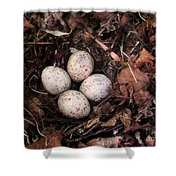 Woodcock Nest And Eggs Shower Curtain by Angie Rea