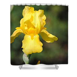 Yellow Iris Shower Curtain by Jai Johnson