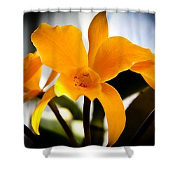 Yellow Magic Shower Curtain by David Patterson
