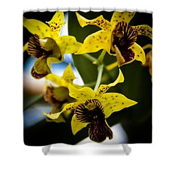 Yellow Orchids Shower Curtain by David Patterson