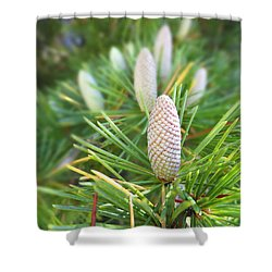 Young Pine Cones Shower Curtain by Anne Mott
