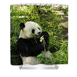 Yum Shower Curtain by John  Greaves