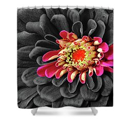 Zinnia Shower Curtain by Dave Mills