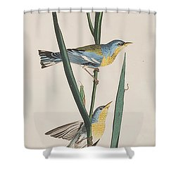 Blue Yellow-backed Warbler Shower Curtain by John James Audubon