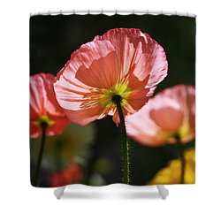 Icelandic Poppies Shower Curtain by Rona Black