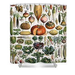 Illustration Of Vegetable Varieties Shower Curtain by Alillot