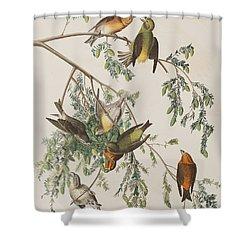 American Crossbill Shower Curtain by John James Audubon
