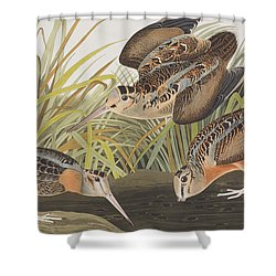 American Woodcock Shower Curtain by John James Audubon