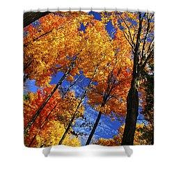 Autumn Forest Shower Curtain by Elena Elisseeva