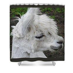 Baby Llama Shower Curtain by Ellen Henneke