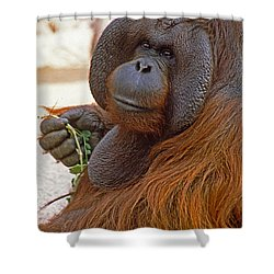 Big Daddy Shower Curtain by Michele Burgess