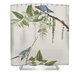 Blue Grey Flycatcher Shower Curtain by John James Audubon